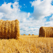 Stock Photo: Hay bales on field