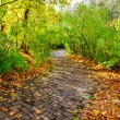 Walkway in autumn park — Stock Photo #13420654
