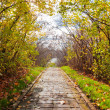 Stock Photo: Alley in autumn park