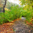 Walkway in autumn park — Stock Photo #13769454
