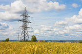 Electrical powerlines and wheat field in summer day — Stock Photo