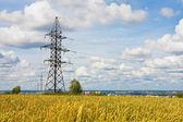 Электрическое поле powerlines и пшеницы в летний день — Стоковое фото