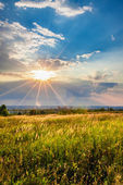 Sunset over a meadow — Stock Photo