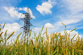 Wheat field and electrical powerline in summer day — Stock Photo