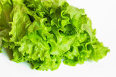 Lettuce isolated on white — Stock Photo