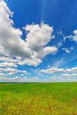 Cielo azul sobre el llano — Foto de Stock