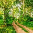 Road in birch forest — Stock Photo #47094405