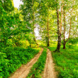 Road in birch forest — Stock Photo #47094413