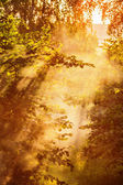 Magical sun rays — Stock Photo