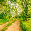 Road in birch forest — Stock Photo #47815005