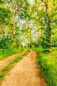 Road in birch forest — Stock Photo