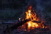 Campfire — Stock Photo
