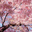 Blossom — Stock Photo #39460749