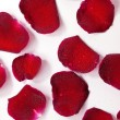 Closeup and isolated red rose petals closeup macro — Stock Photo