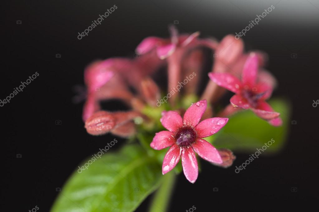 Beauty flowers on black background — Stock Photo #17462809