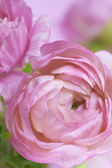 Flowers art. Wedding holiday card — Stock Photo