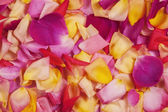 Rose petals. Abstract floral background. — Stock Photo