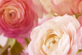 Flowers art closeup. Floral background — Stock Photo