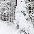 White winter tree with snow and branch in forest — Stock Photo