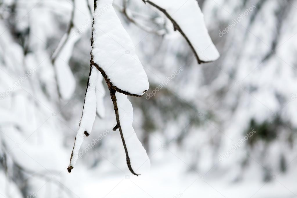 White winter tree with snow and branch in forest closeup. Cold wilderness in Karkonosze mountains, Poland. Natural background. — Stock Photo #14068257