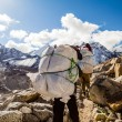 Stock Photo: People walking trail in HimalayMountains