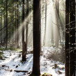 Forest in winter season — Stock fotografie