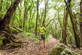 Hiker walking in green forest — Stock Photo