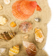 Beautiful sand background with exotic shell - Stock Photo