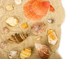 Beautiful sand background with exotic shell — Stock Photo