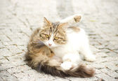 Beautiful young cat — Stock Photo