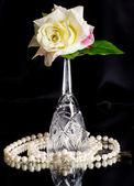 Schöne weinglas mit weißer rose — Stockfoto