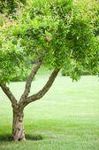 спринг-парк с большим деревом с свежие зеленые листья — Стоковое фото