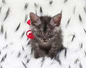Kırmızı yay ile gri kedicik — Stok fotoğraf