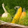 Miniature pumpkins in basket — Stock Photo