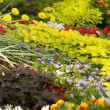 Blooming flowers in late summer garden flowerbeds — Stock Photo