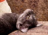 Gray cat on a sofa — Stock Photo