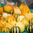 Stock Photo: Miniature pumpkins