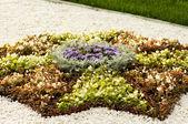 Spring flower garden background — Stock Photo