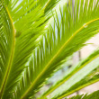 Leaves of palm and morning light — ストック写真