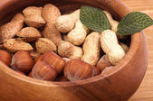 Tasty Hazelnuts — Stock Photo