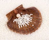 Beautiful exotic shell and pearl — Stockfoto
