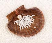 Prachtige exotische shell en pearl — Stockfoto