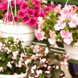 Multicolored flowers in pots — Stock Photo