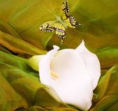白いリリーと色の蝶 — ストック写真