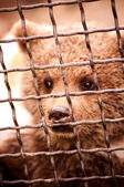 Bear in a cage — Stock Photo