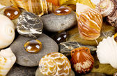 Beautiful background with exotic stones and shell — Stock Photo