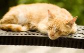 красный кот спит на скамейке в парке — Стоковое фото