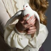 Beautiful woman with white dove on dark background — Stock Photo