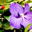 Stock Photo: Beautiful violet flower