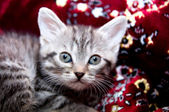 Beautiful young cat — Stock Photo